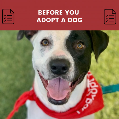 before you adopt