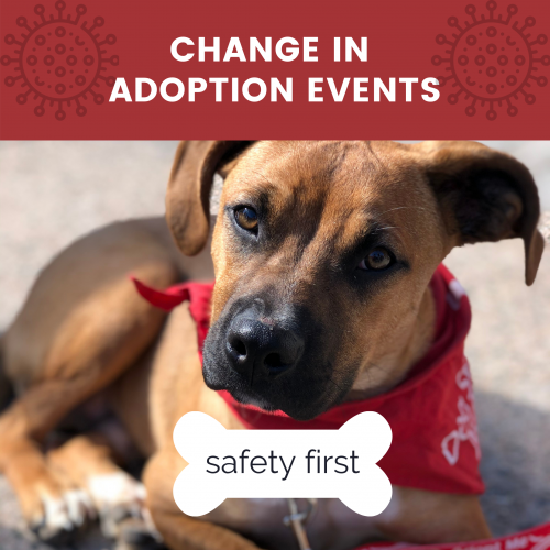 adoption event changes