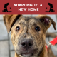 10 tips newly adopted dog