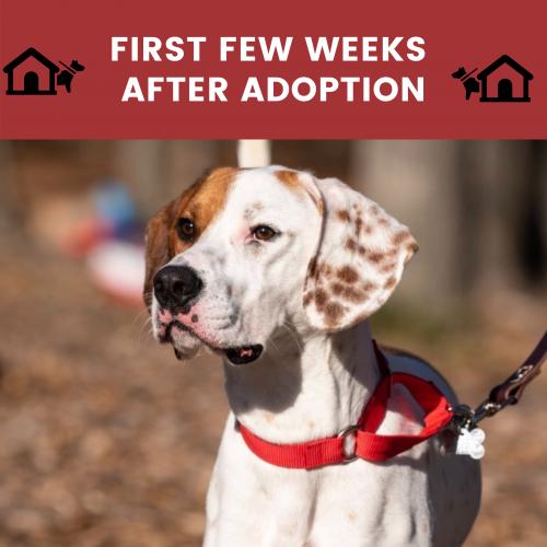 dog adoption adjustment period