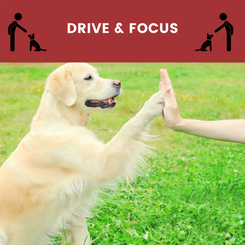 drive and focus