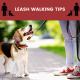 leash walking tips
