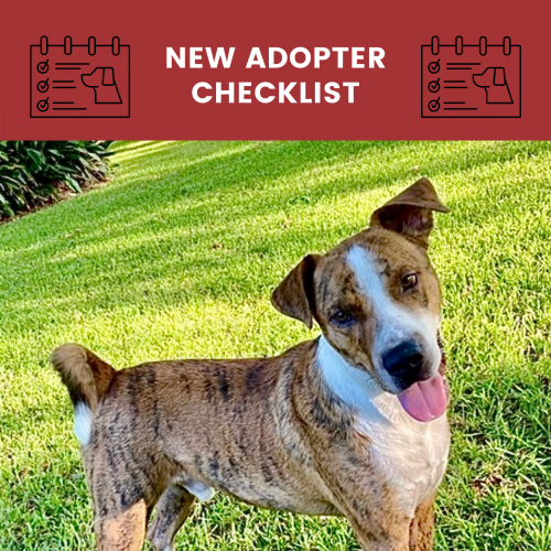 new adopter checklist