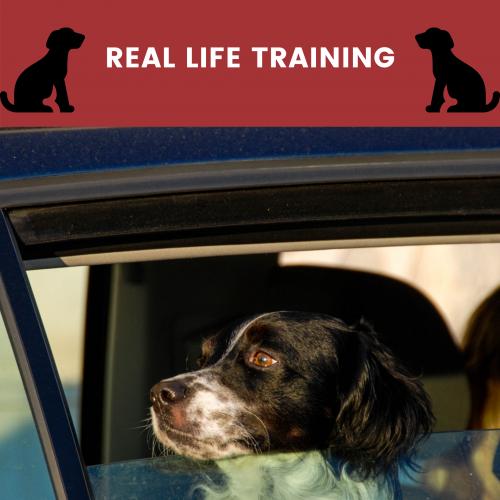 real life training