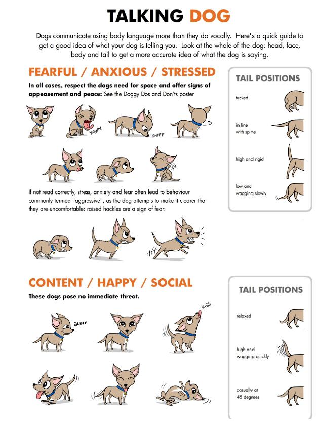 talking dog body language