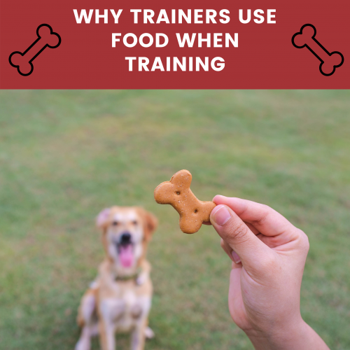 why dogs trainers use food