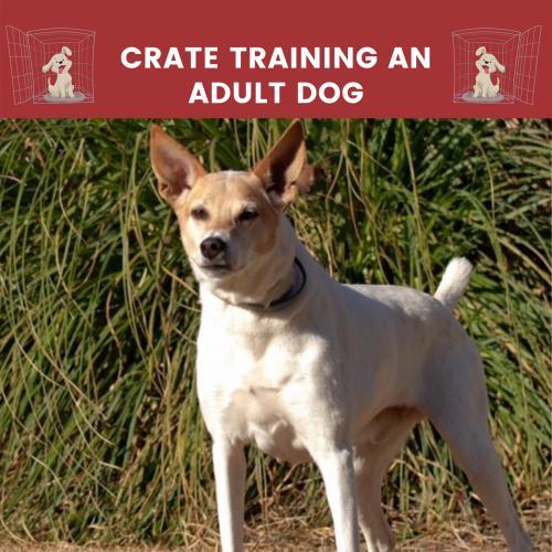 crate training adult dog