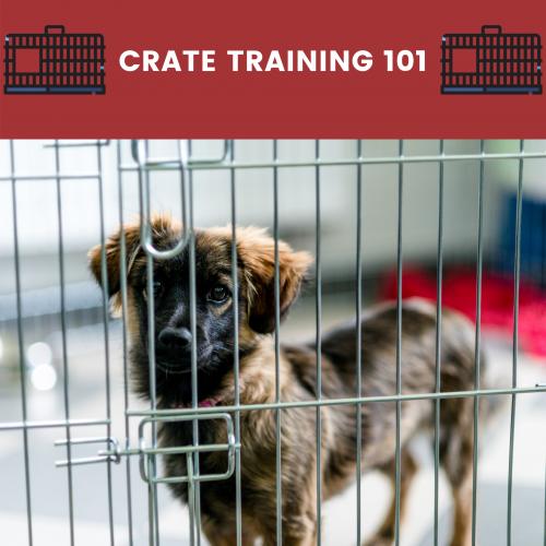 crate training 101