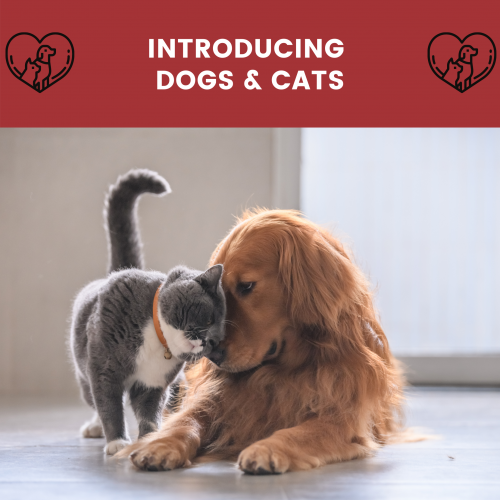 introducing dogs cats
