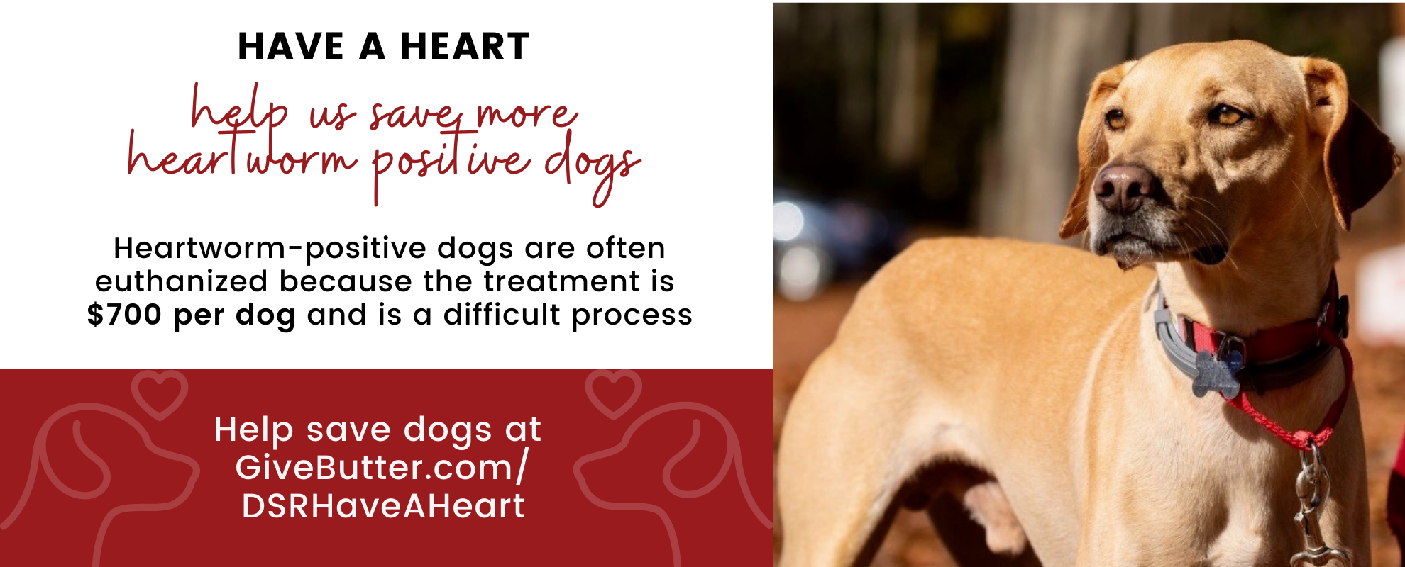 dog star have a heart campaign